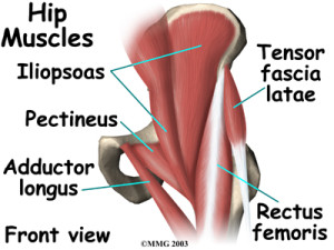 hip_anatomy_muscles01